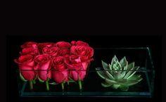 roses en vogue | ovando nyc