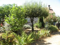 2 habitable houses. 1 bed house + 2 bed house fully restored. Amazing views.  Farm with 4,000m2 land. Wine cellar, vineyard and agricultural land. Well with plenty of water.