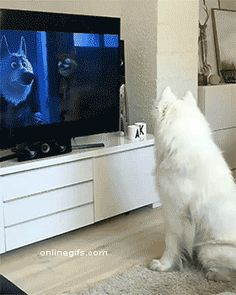 He's totally into the movie - OnlineGIFs