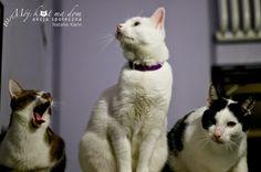 Mój kot ma dom - Akcja społeczna: IV.100