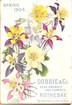 Dobbie & Co, Seed Growers-Spring 1904 Garden Catalogs, Seed Catalogs, Vintage Gardening, Organic Gardening, Gardening Books, Columbine Flower, Vintage Seed Packets, Seed Packaging, Floral Illustrations