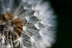 Aigrette - http://www.sebastiencaverne.fr/aigrette/ #Eau, #Errance, #Nature, #Vent