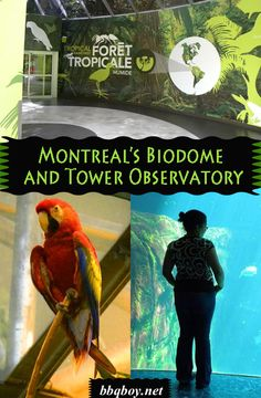 """All about two of Montreal's most popular tourist sites: the Biodome and the Tower Observatory #bbqboy #Montreal #Biodome #travel"""""""