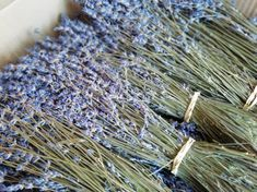 English lavender bunches in a box ready to send. Dried lavender flowers from Bri. Dried Lavender Wedding, Dried Lavender Bunches, Dried Flowers, Lavandula Angustifolia, Bunch Of Flowers, How To Dry Basil, English Flowers, British, Wedding Bouquet