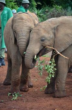 Photos of David Sheldrick Wildlife Trust, Nairobi - Attraction Images - TripAdvisor
