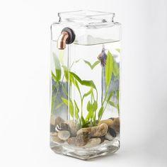 NoClean Aquariums < Pets Shop Hassle-Free Betta Fish Habitat