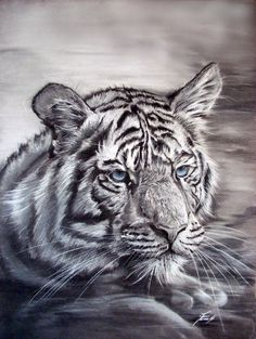 1000 Images About Tiger Drawings On Pinterest Tiger