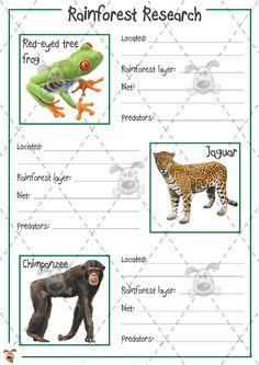 Teacher's Pet - Rainforest Animal Research (colour) - Premium Printable Classroom Activities and Games - EYFS, KS1, KS2, research, facts, rain, forest, animals