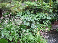 Arthropodium cirratum (rengarenga lily) and Ligularia reniformis - tropical garden ideas Small Tropical Gardens, Small Gardens, Outdoor Gardens, Townhouse Garden, Shade Plants, Shade Garden, Native Plants, Hedges, Garden Planning