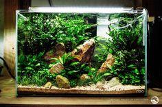 Amazing Aquarium Design Ideas Indoor Decorations 35 - Another! Cichlid Aquarium, Aquarium Aquascape, Aquarium Terrarium, Nature Aquarium, Planted Aquarium, Tropical Fish Aquarium, Aquascaping, Betta Tank, Nano Cube