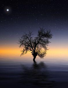 Tree night - null