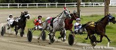 harness racing   Harness racing has been a Bangor tradition since the mid-1800s.