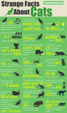 cats fact infographic