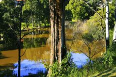 Calm waters Calm Waters, B & B, Aquarium, Plants, Beautiful, Aquarius, Fish Tank, Flora, Plant