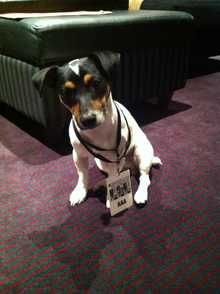 Alfie, aged 11 and 1/2 yrs.  Pedlars 108th Dog of the Week.