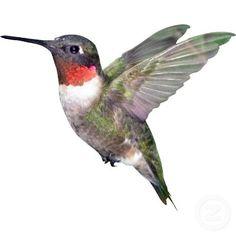 bird artwork - Hummingbird Christmas Ornament Zazzle com Hummingbird Drawing, Hummingbird Pictures, Watercolor Hummingbird, Watercolor Bird, Hummingbird Wallpaper, Hummingbird Illustration, Bird Artwork, Little Birds, Colorful Birds