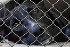 Taiwan recently banned the euthanasia of stray animals. Now, animals in shelters can no longer be put to death because they remain unclaimed. Applaud the Taiwan parliament for standing up for animal rights.  ***Now, if only the U.S., Europe, and other countries did the same thing!