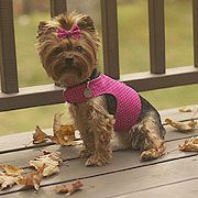 Free Patterns For Dog Harnesses And Dog Backpacks
