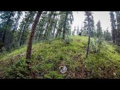 ▶ Grizzly Bear Charge in Jasper - YouTube  Something I truly hope I don't have a run in with while mountain biking!