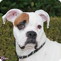 Adopt A Pet :: ELLA BEAN - Huntington Beach, CA