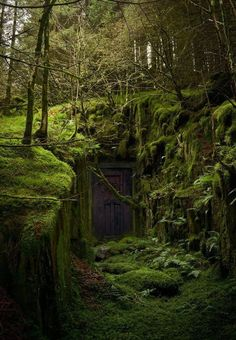 magical secret door in the forest wald, Abandoned Buildings, Abandoned Places, Fantasy Landscape, Urban Landscape, Landscape Art, Landscape Sketch, House Landscape, Forest Landscape, Landscape Photos