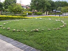 "fairy rings, it is said if you see this or a ring of much ""greener grass"", it is where the fairies danced!"