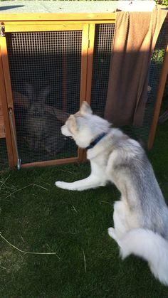 Kom ud og leg lille kanin