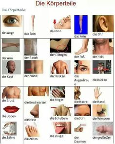 English For Beginners: the body Foreign Language Teaching, German Language Learning, Teaching English, German Grammar, German Words, English Words, German English, English Fun, English Lessons
