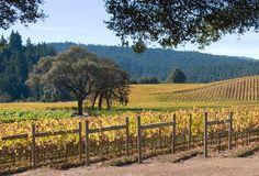 anderson valley is beautiful! vineyards