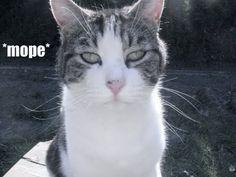 Twilight - LOLcats style