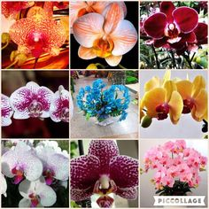 FLOWER seeds for home garden Phalaenopsis orchid seeds buy-direct-from-china orquidea semente 30PCS orchid-seed f96