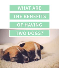 Here's why you should always have at least 2 dogs! Cute Dog Pictures, Two Dogs, Shih Tzus, Black Babies, Dogs And Puppies, Doggies, Four Legged, Dog Owners, Animals And Pets