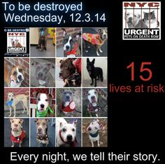 TO BE DESTROYED:15 Dogs to be euthanized by NYC ACC- WED. 12/03/14. This is a HIGH KILL shelter group. YOU may be the only hope for these pups! ****PLEASE SHARE EVERYWHERE!!!!To rescue a Death Row Dog, Please read this: http://urgentpetsondeathrow.org/must-read/ To view the full album, please click here: https://www.facebook.com/media/set/?set=a.611290788883804.1073741851.152876678058553&type=3