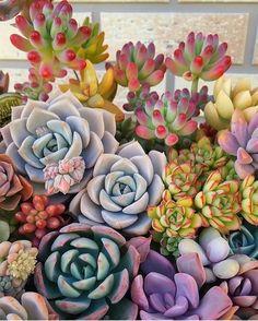 Succulent Arrangements, Cacti And Succulents, Planting Succulents, Planting Flowers, Echeveria, Sempervivum, Air Plants, Indoor Plants, Plant Painting