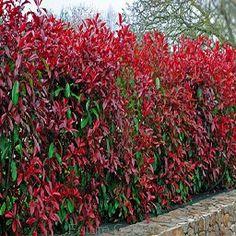 Red Robin, Colorful Garden, Edible Garden, Small Gardens, Grass, Pergola, Beautiful, Design, Home Decor
