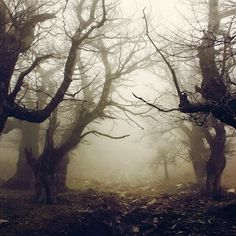 Dark Forest, Evia, Greece