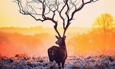 amazing photo ... A distant tree meets with the head of a doe, making what appears to be the grandest antlers in all of the forest…