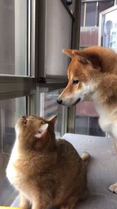 Please follow board for more videos #cats #funnycats #catlovers #pets #dogs #funnydogs #doglovers