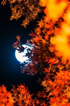 harvest moon, falling leaves...