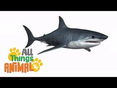SHARKS: Animals for children. Kids videos. Kindergarten | Preschool learning - YouTube