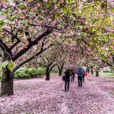 Brooklyn Botanical Garden by @javanng #newyorkcityfeelings #nyc #newyork