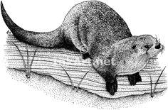 Google Image Result for http://www.inkart.net/illustration/wildlife/northern_river_otter/northern_river_otter_large.gif