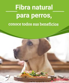 Fibra natural para perros, conoce todos sus beneficios - Mis animales  La fibra natural es muy beneficiosa para nuestro perro. En este artículo te explicamos las razones y qué alimentos la contienen que sean aptos para él.
