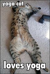 The best way to stretch the stress out of your life. Cat style yoga.