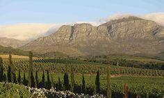 Cape wine route, South Africa... To this list I would also add Babylonstoren as a must see place to tour the gardens and have lunch!