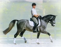 """""""Kindergarten"""" dressage exercises for relaxing and softening your horse to your aids"""