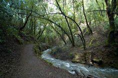 Hidden Villa. Los Altos Hills,  CA... Many of my summer days here.