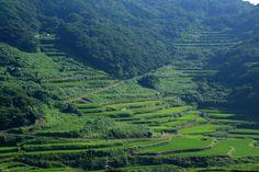 日本の原風景・・春日の棚田の画像 | Taloonの写真館 ~癒しを求めて~
