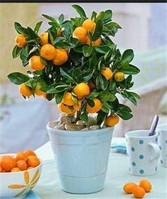 2017 New Delicious Fruit Seeds High Quality Orange Seeds Miniature Bonsai Living Room Planting Potted Plant Nature Plants 10 Pcs