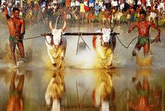 At the annual Maramadi festival during the post harvest season in the villages of Kerala in southern India, a peculiar bull race takes place. India Travel Guide, Rural India, Image Model, Extreme Sports, All About Eyes, Kerala, Digital Illustration, Surfing, Racing